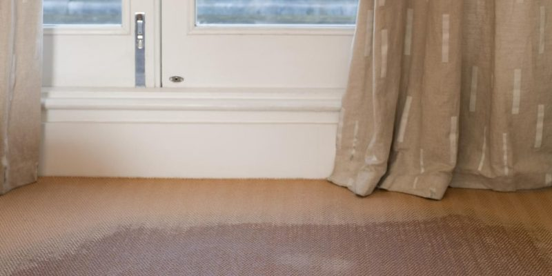 Safety Precautions for Mold Removal