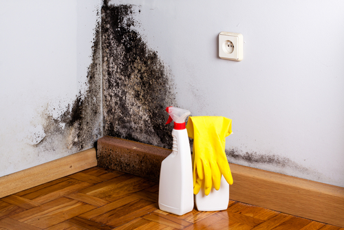 Natural Home Solutions for Black Mold